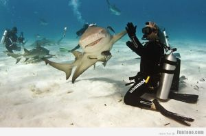 Shark-Give-me-High-five